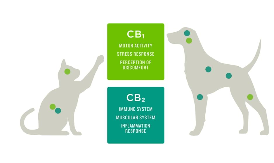 CBD for your system