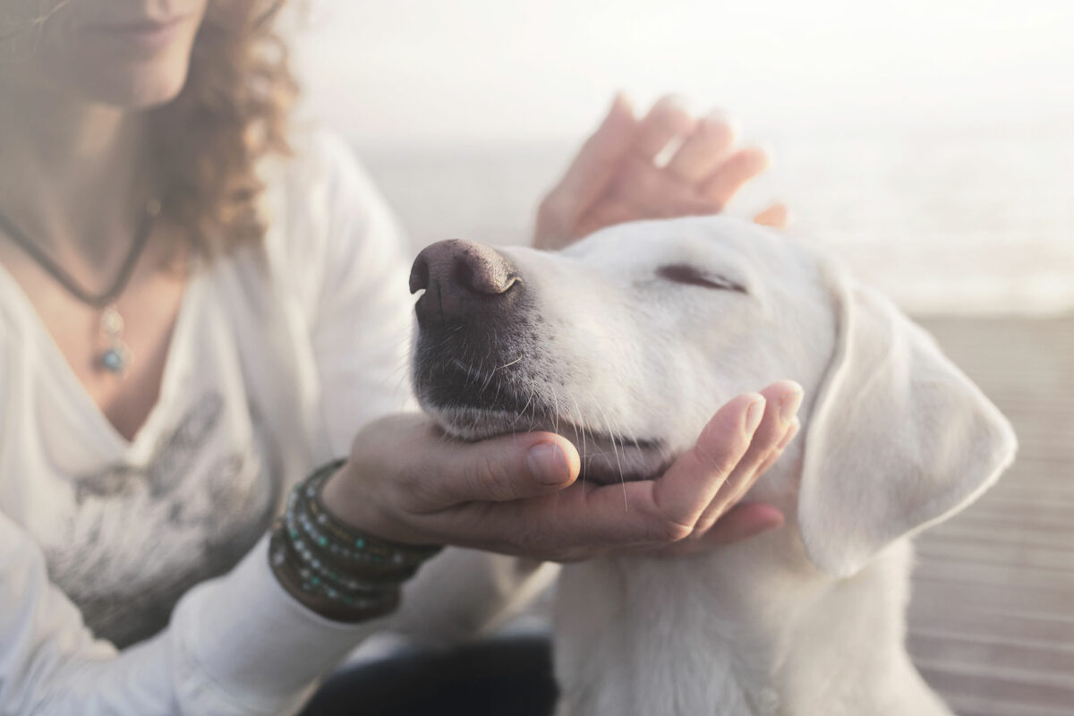 what are the benefits of krill oil dog supplements