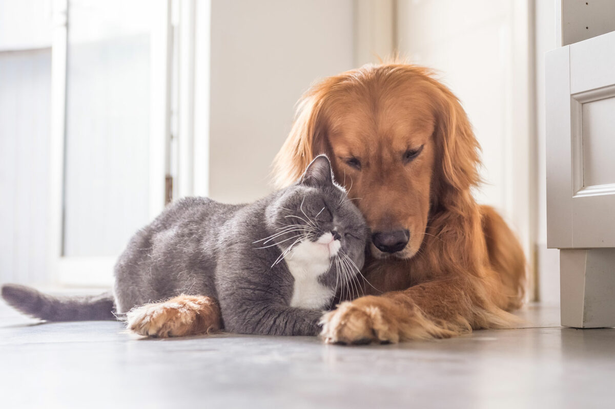 how to introduce a cat to a dog